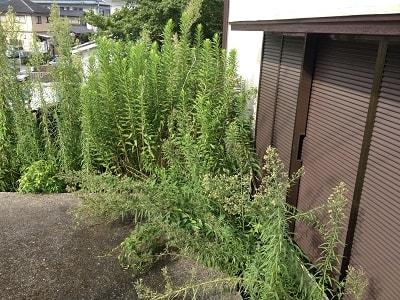 お庭がある家では、庭木のつぎに問題 となる草刈り・草とりです。 庭木みたいに大きくはならないし、 年に1~2回程度、家族で行っている 方もおられるかもしれません。 しかし、雑草は伸びるのも早く、 放っておくと家のまわりは草に囲まれ 防犯的によくありません。 ここは、 「長いこと空き家になっている」と まわりに知らせているようなものです。